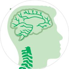 МРТ головного мозга и шейного отдела позвоночника