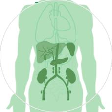4. МРТ живота